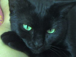 Magnoux, chat Gouttière