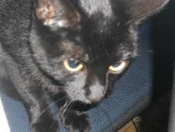 Maia, chat Gouttière