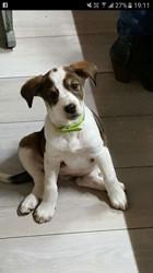 Maika, chien