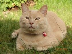 Maiko, chat Gouttière