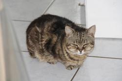 Mailo, chat Gouttière