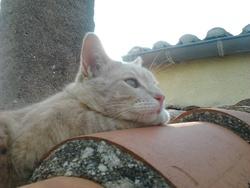 Malawi, chat Gouttière
