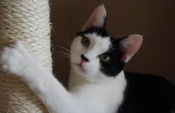 Maley , chat Gouttière