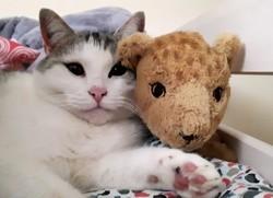 Mali, chat Gouttière