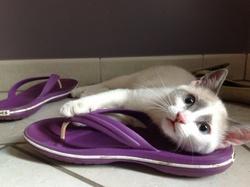 Malo, chat Gouttière
