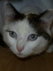 Malone, chat Gouttière