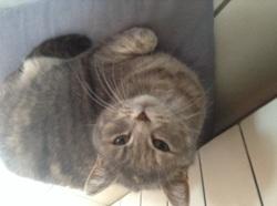 Malou, chat Gouttière