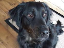 Malou1, chien