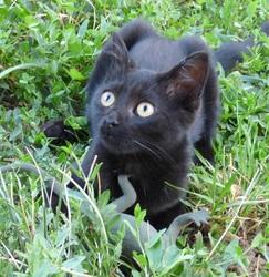 Malta, chat Gouttière