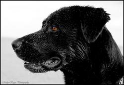 Malya, chien