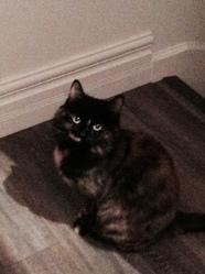 Mam'Zelle, chat Gouttière