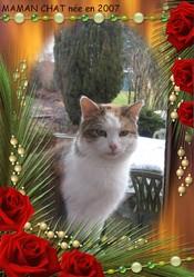 Maman Chat, chat Gouttière