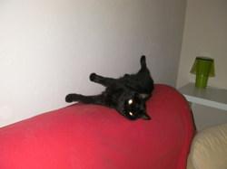 Mani, chat Gouttière
