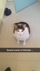 Manie, chat