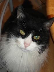 Mano, chat Gouttière