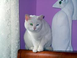 Manouche, chat Gouttière