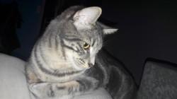 Many, chat Gouttière