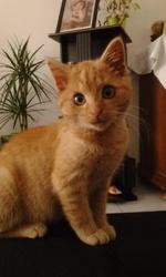 Mao, chat Gouttière