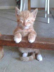 Maou, chat Gouttière