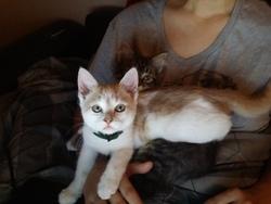 Mara, chat Gouttière