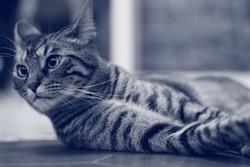 Marcel, chat Gouttière