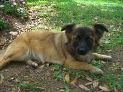 Marcel, chien