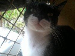 Marcel, chat