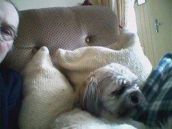 Marcel, chien Lhassa Apso