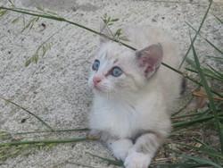 Margot, chat Gouttière