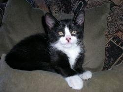 Marguerite, chat Gouttière
