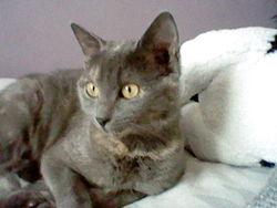 Odile, chat Gouttière