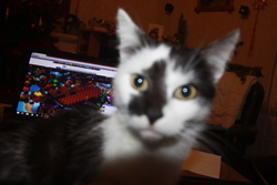 Mario, chat Gouttière