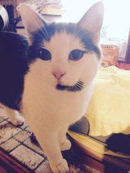Alvin, chat Gouttière