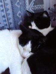 Marley, chat Gouttière