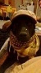 Marley, chien Braque allemand à poil court