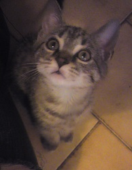 Marley, chat