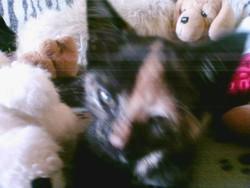 Marquise, chat Gouttière