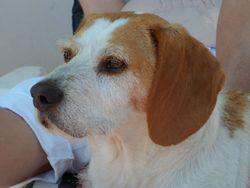 Martin, chien