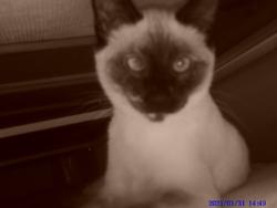 Martine, chat