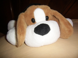 Mascotte, chien Beagle