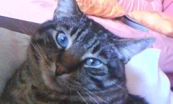 Mathéo, chat