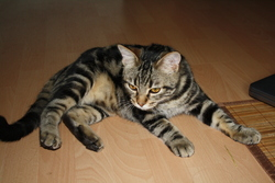 Mathéo, chat Gouttière
