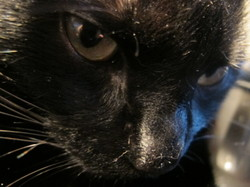 Matisse, chat