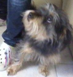 Max, chien