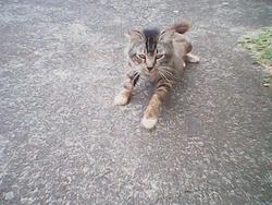 Max, chat Gouttière