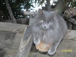 Maxou, chat Gouttière