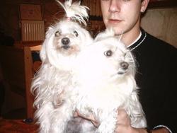 Maya, chien Bichon maltais