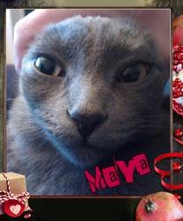 Maya, chat