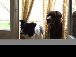 Maya Et Lilo, chien