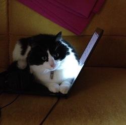 Mayeve, chat Gouttière